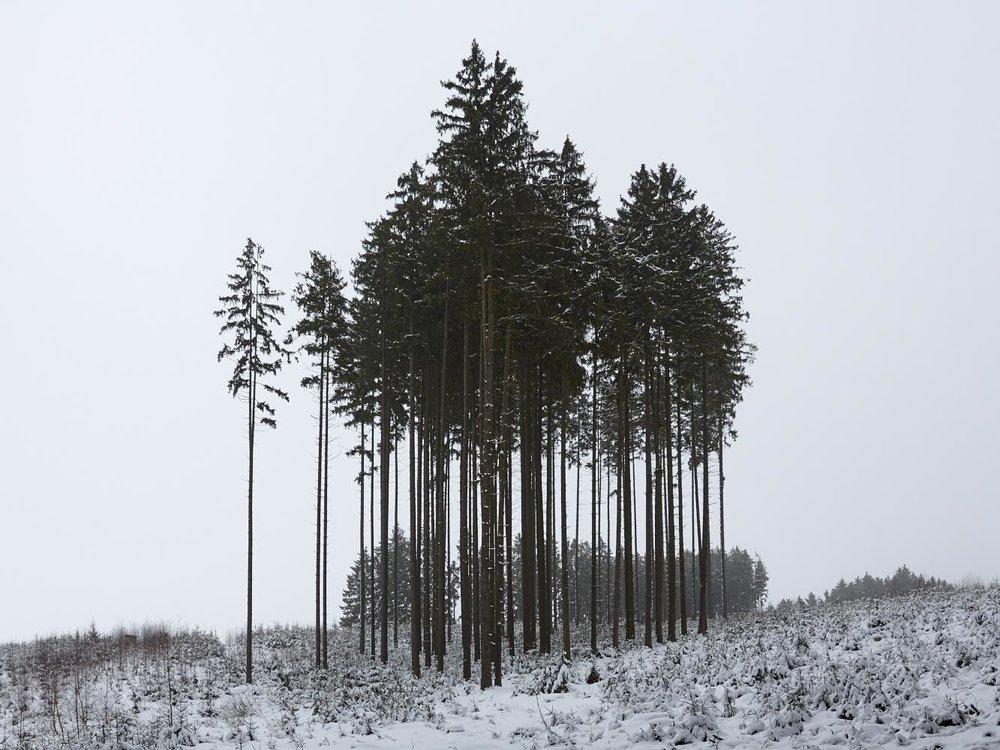 Photo: Frost #1, Thomas Wieland