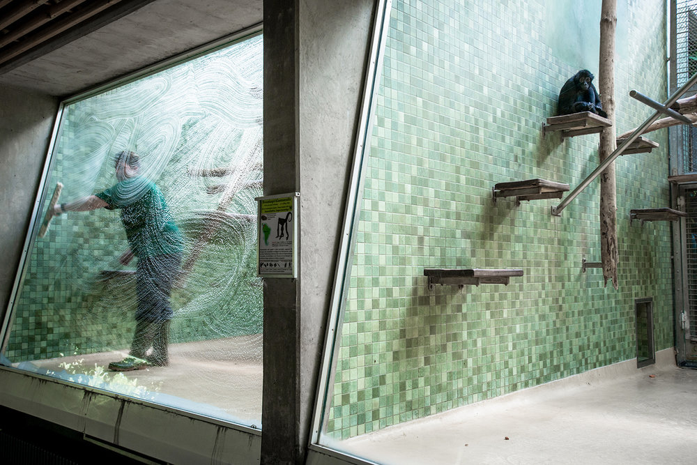 Spider Monkey and Staff Cleaning Window at a Zoo in Germany ,  Jo-Anne McArthur /Born Free Foundation