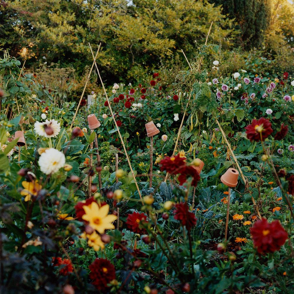 Charlie's Garden ,  Carlotta Cardana