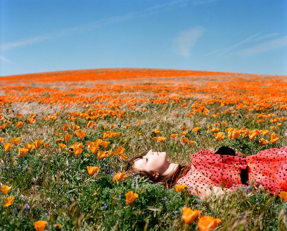 Stella in the Poppies ,  Amanda Friedman