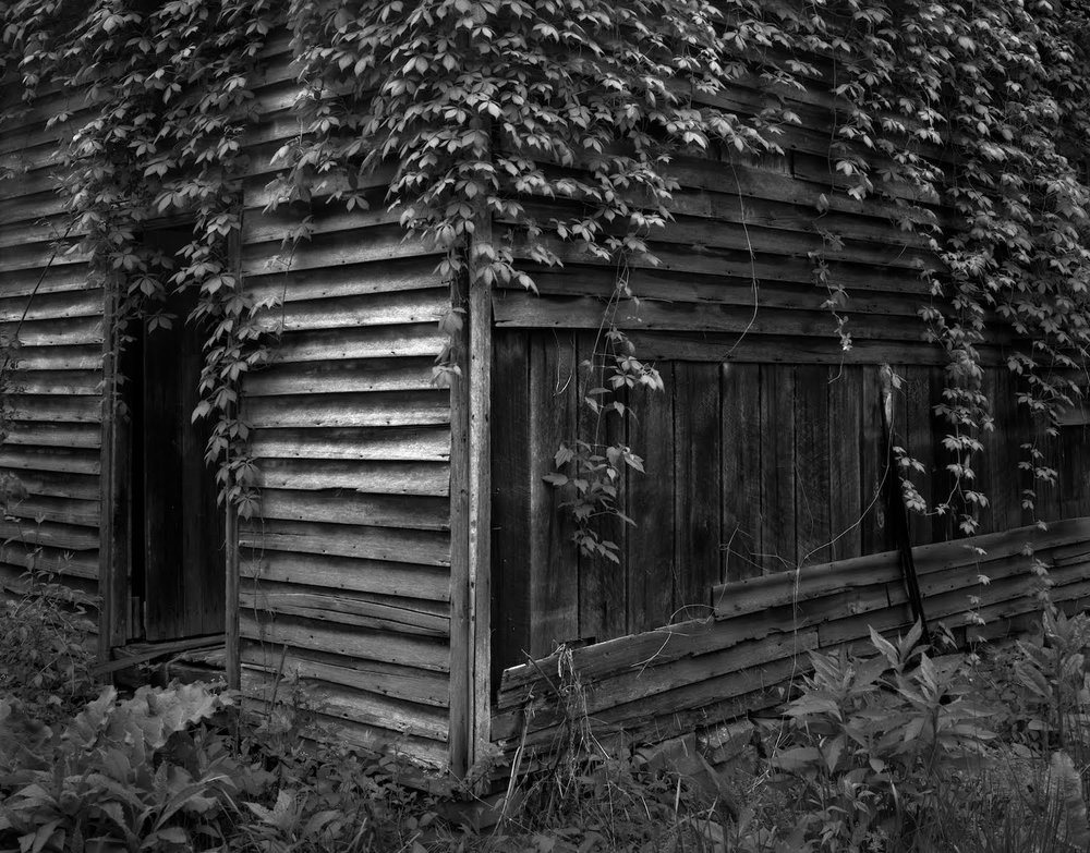 Shed With Vines, Morehead, Kentucky ,  David Bartlett