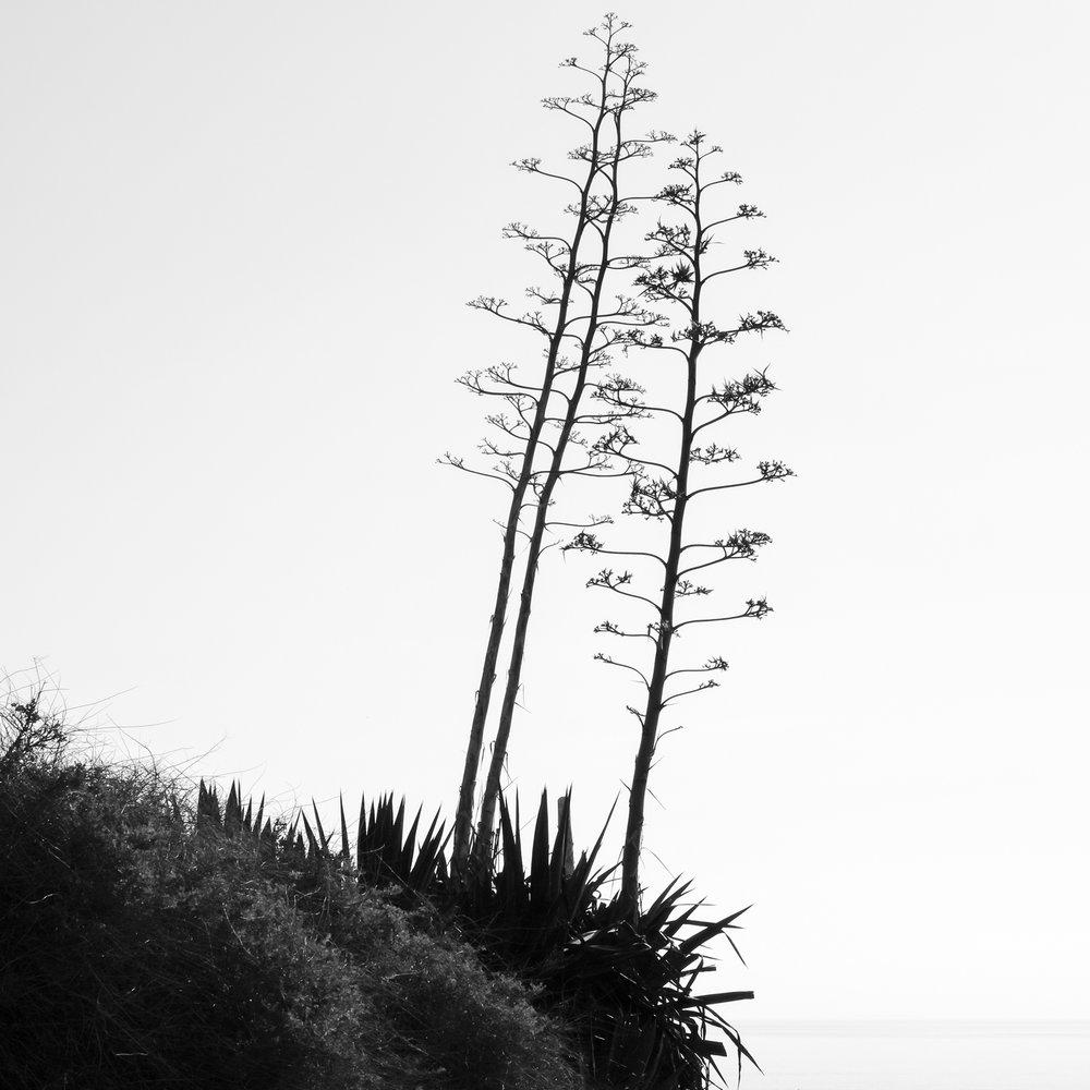 Landscape Sampling ,  Cyril Sancereau