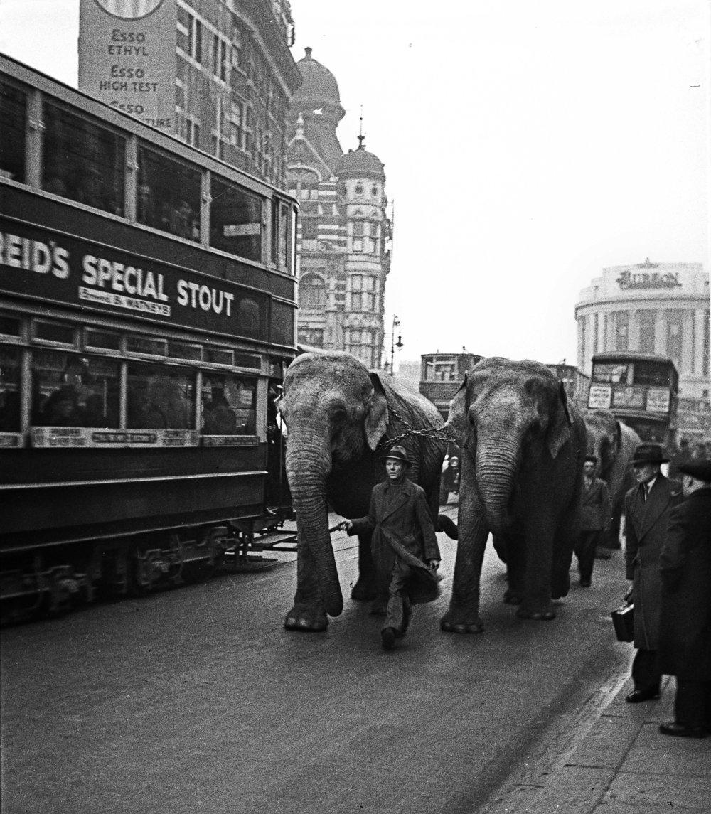 Circus in Town, c. 1930s