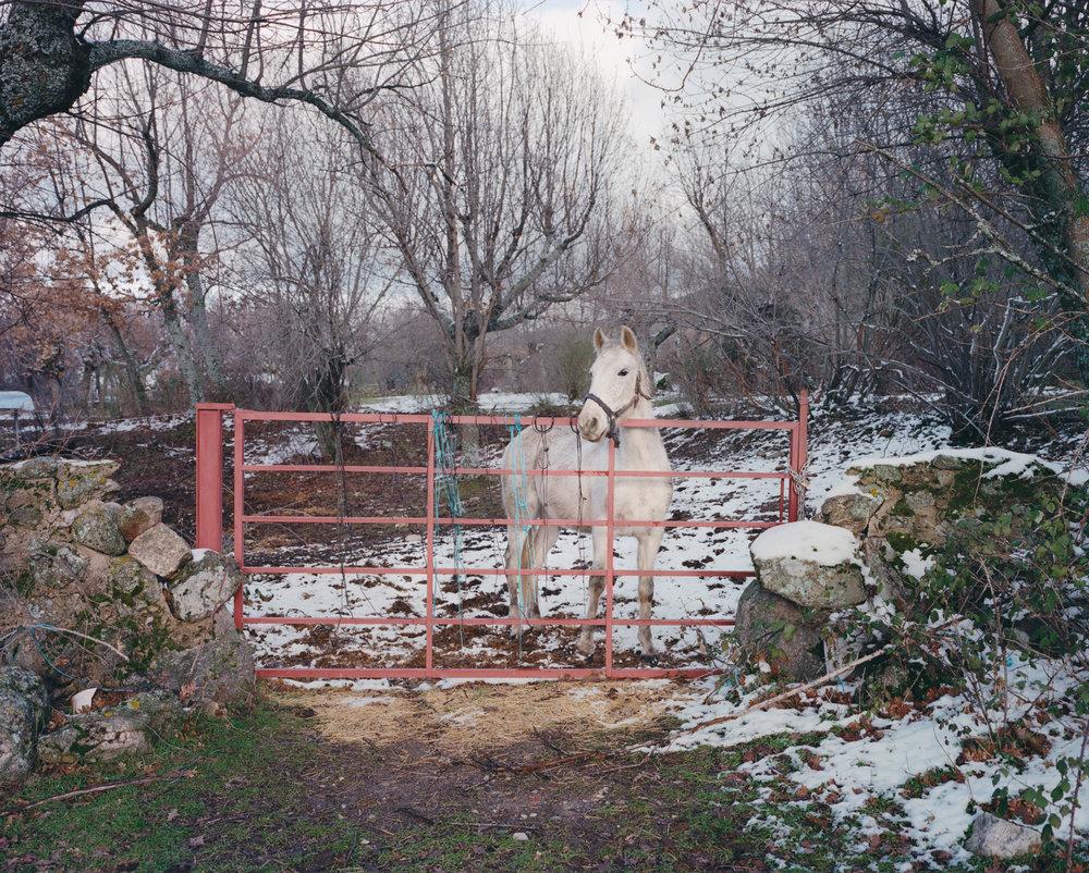 Horse, Collado Hermoso ,  Juan Aballe