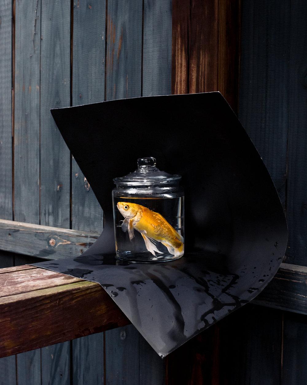 Untitled (Goldfish) ,  Ernesto Solana