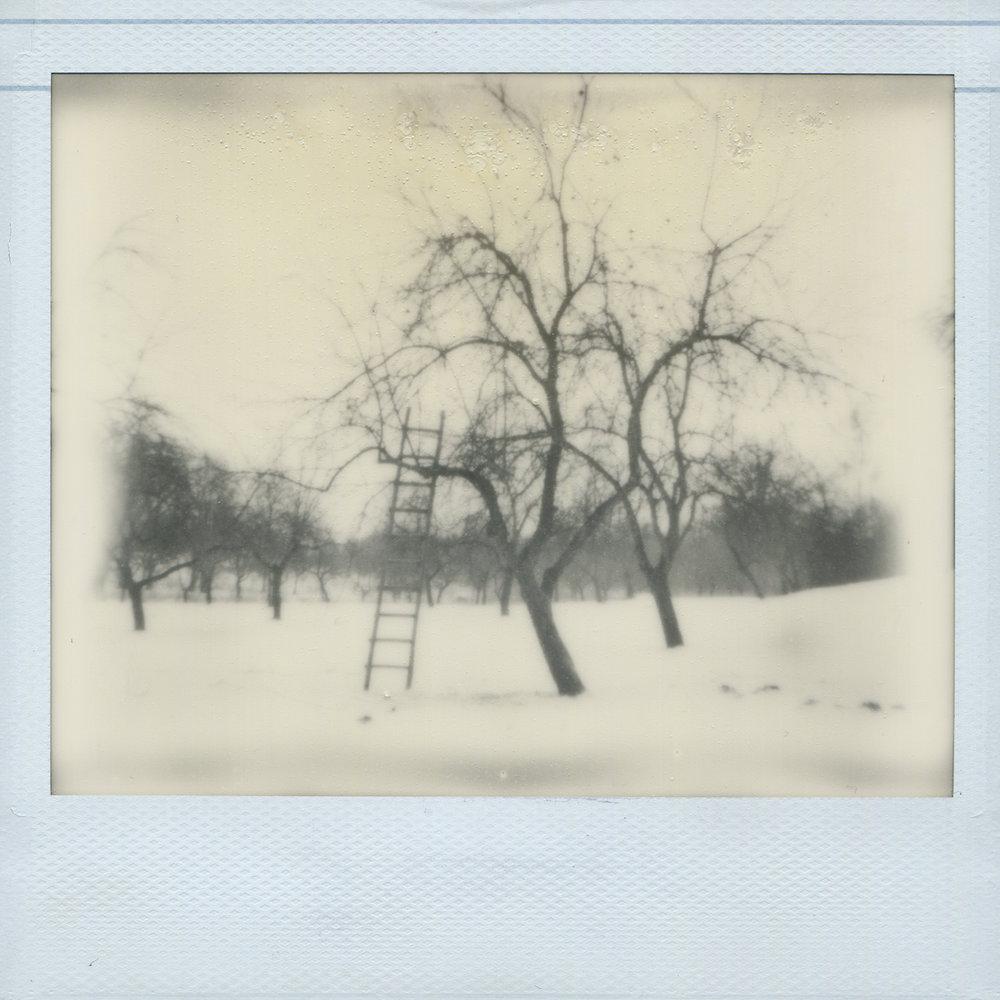 Sleeping in an Apple Orchard ,  Alena Kakhanovich