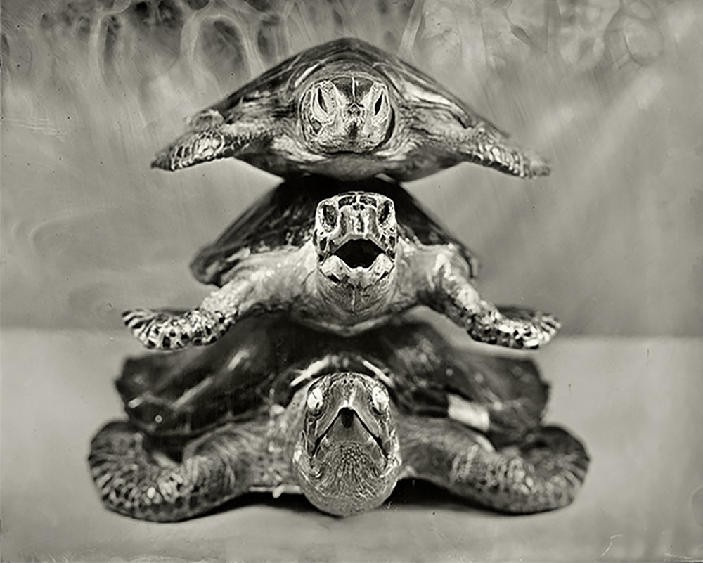 Stacked Turtles  from the series  Trafficked ,  Christine Fitzgerald