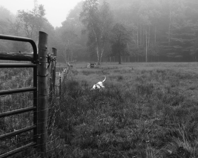 Dog in Field, Maine, 2016 ,  Sydney Krantz
