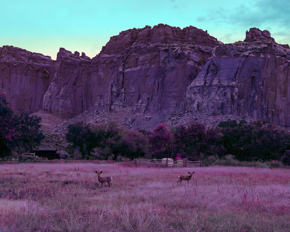 Fawns at Capitol Reef ,  Mischelle Moy