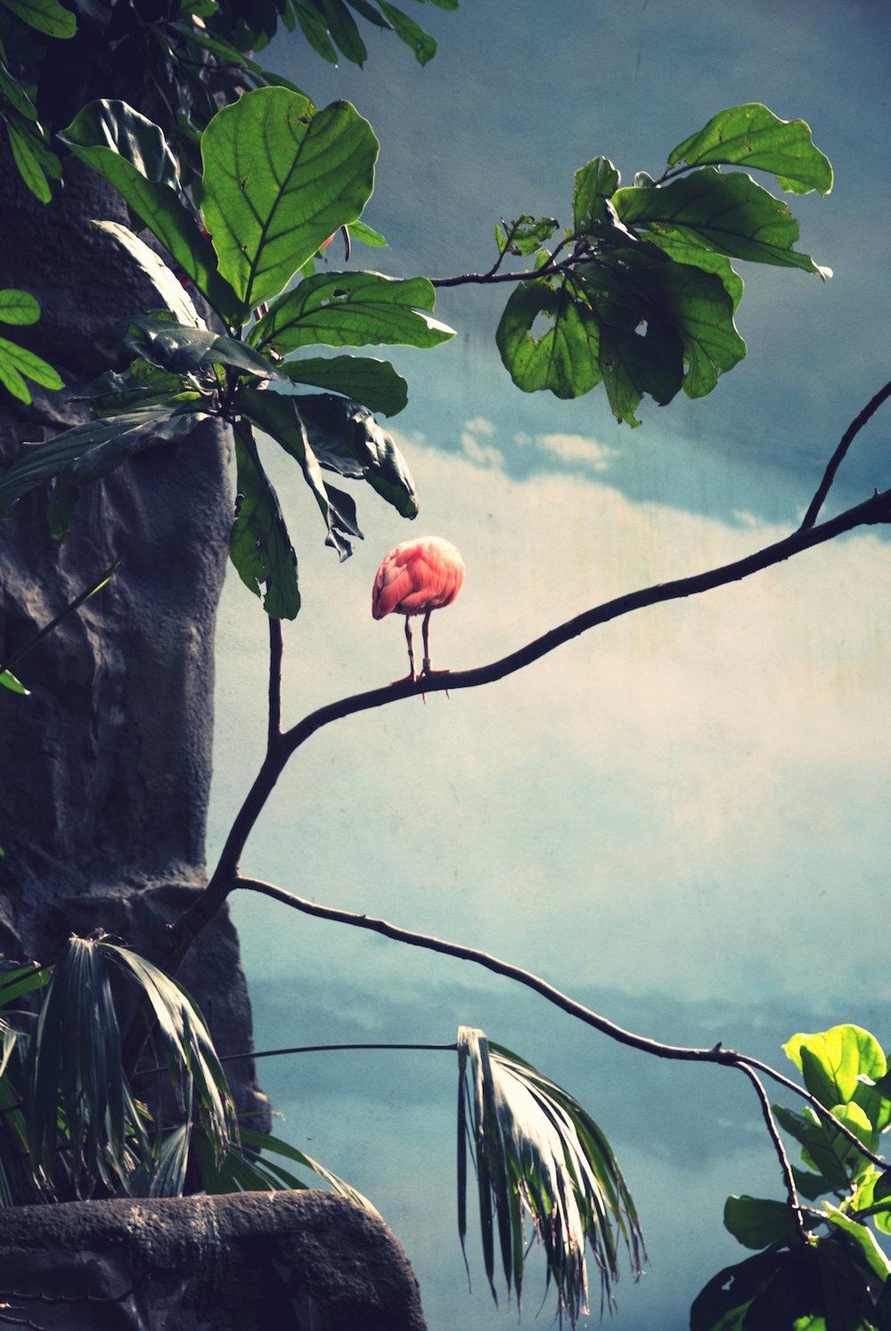 Pink Flamingo ,  Ayline Olukman