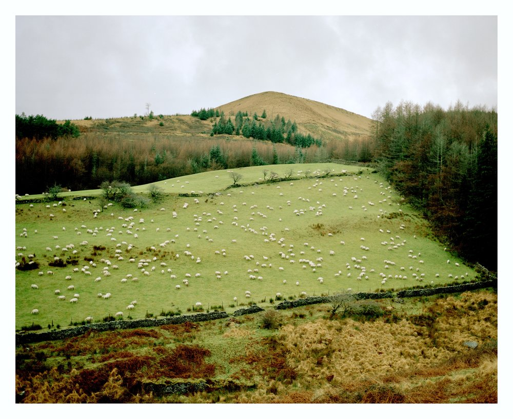 Sheep, The Bwlch  from the series  Gap in the Hedges ,  Dan Wood