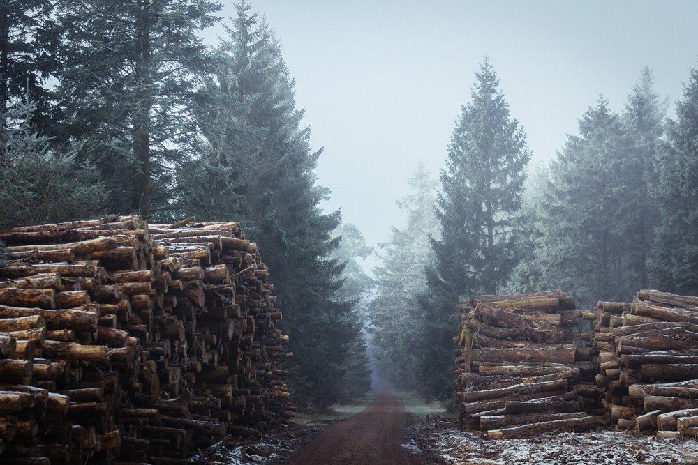 Forest, Denmark ,  Henrik Emtkjær Hansen