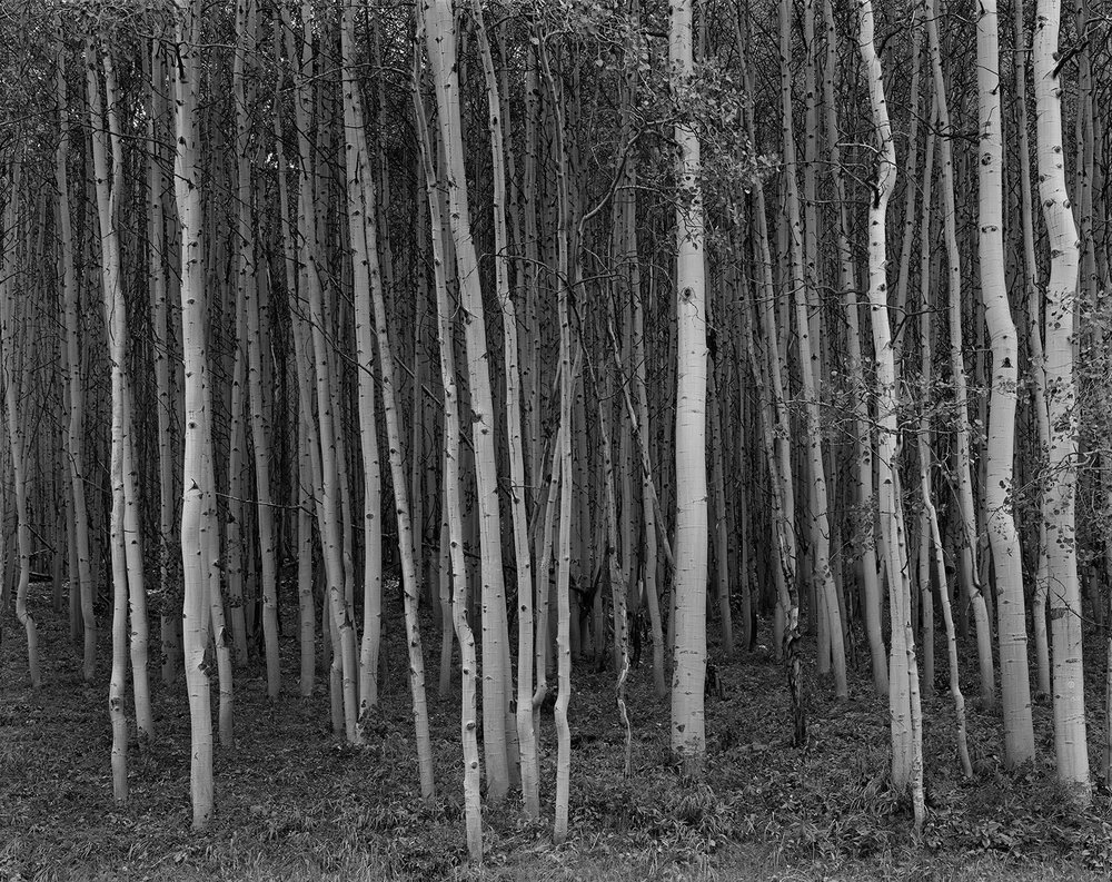 Aspen Grove, Aspen Colorado, 1969