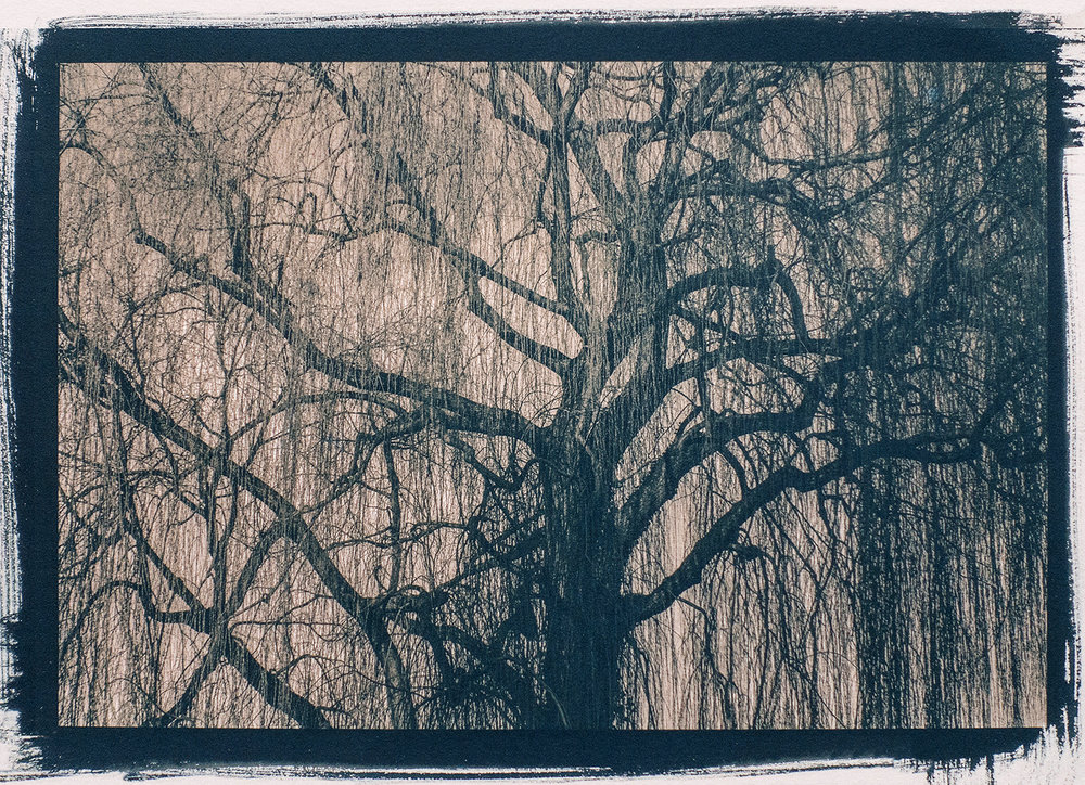 Weeping Willow ,  Annette Golaz
