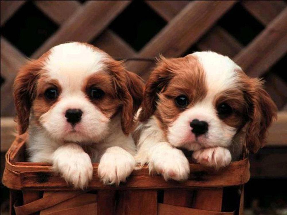 puppy5.jpeg