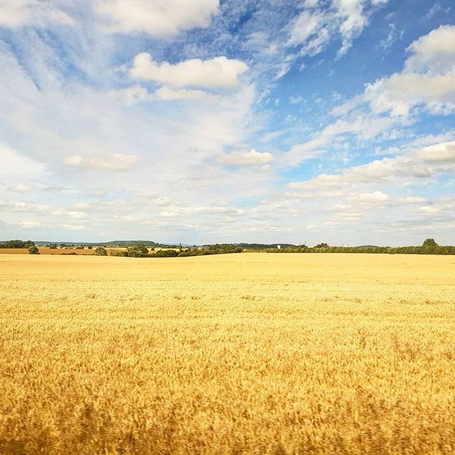 wheat fields #goldenfields #france #travel #countryside