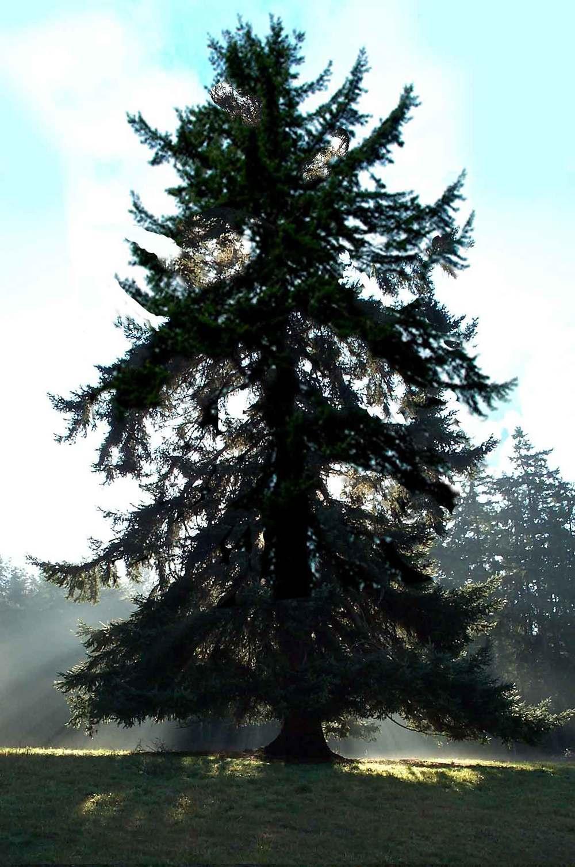 tree.sun3.jpg