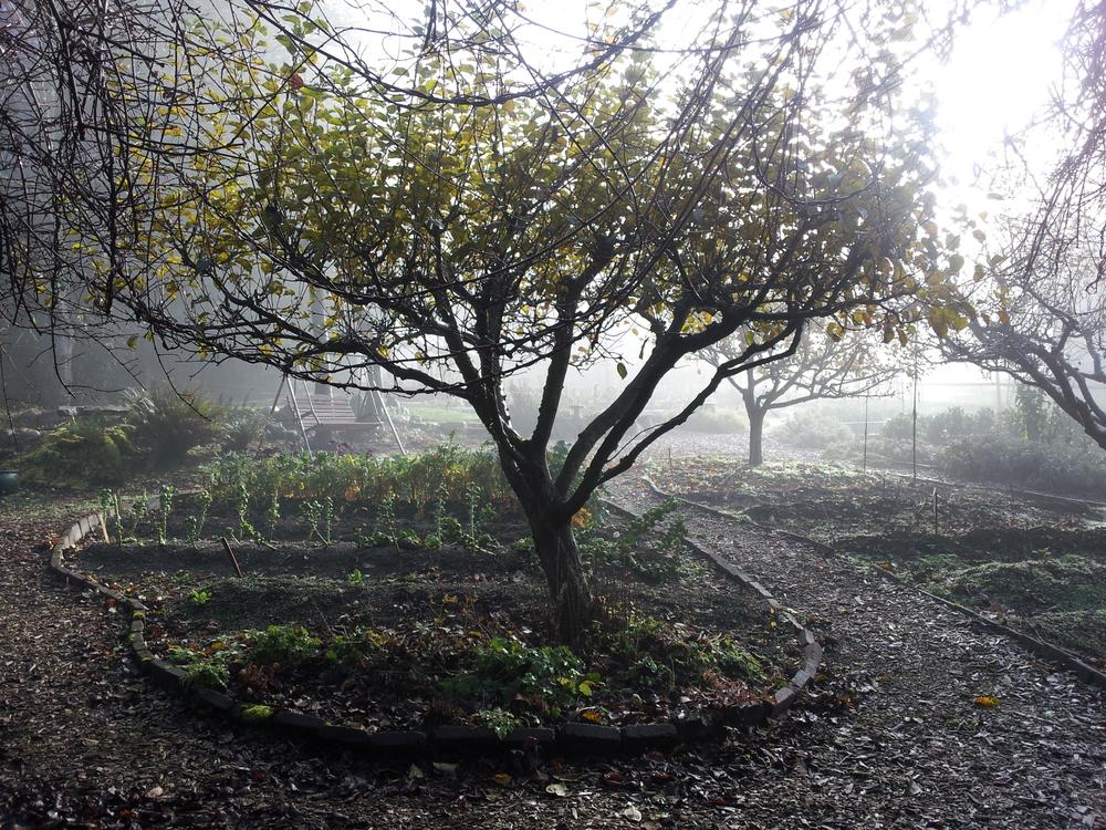 2012-11-24 10.23.22_2.jpg