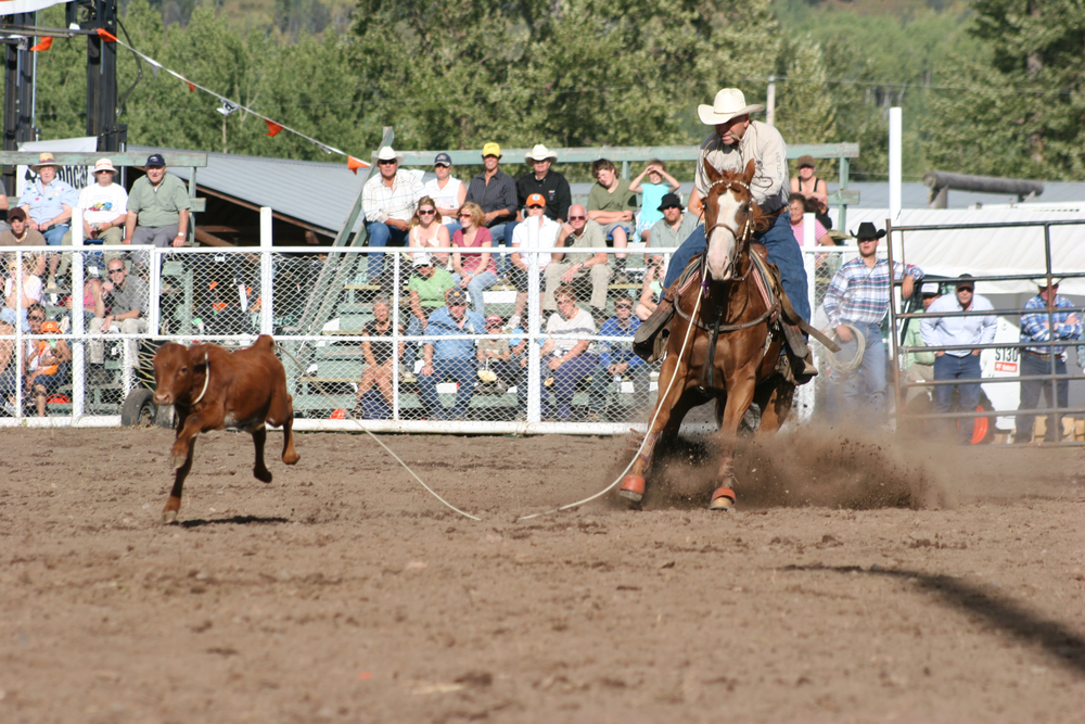 Tie Down Roping   Photo Credit: Photographic Options - Wendy Perry
