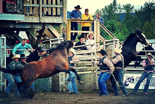 Wild Horse Race   Photo Credit: FOUR L FARM - SR McClary