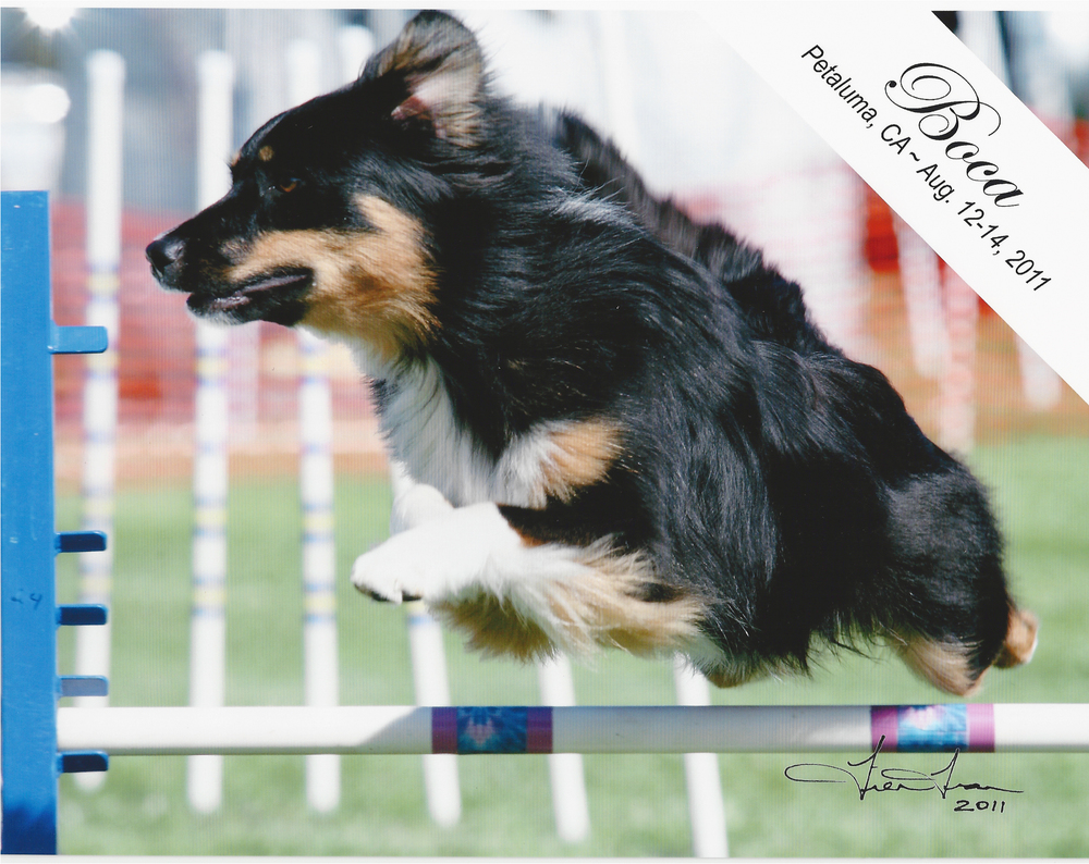 First agility trial - Photo by Tien Tran