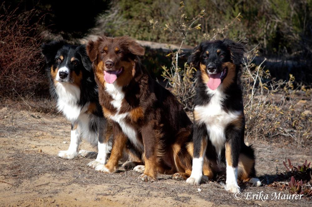 Three Generations:  Star, Rubi, Boca