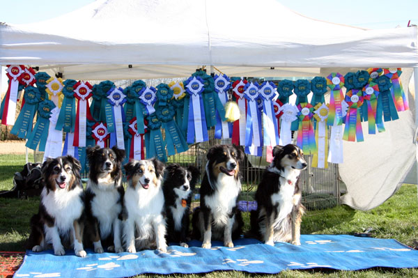 Chase, Trek, Tahoe, Killy, Taiko and Annabelle at the 2006 CPE Nationals
