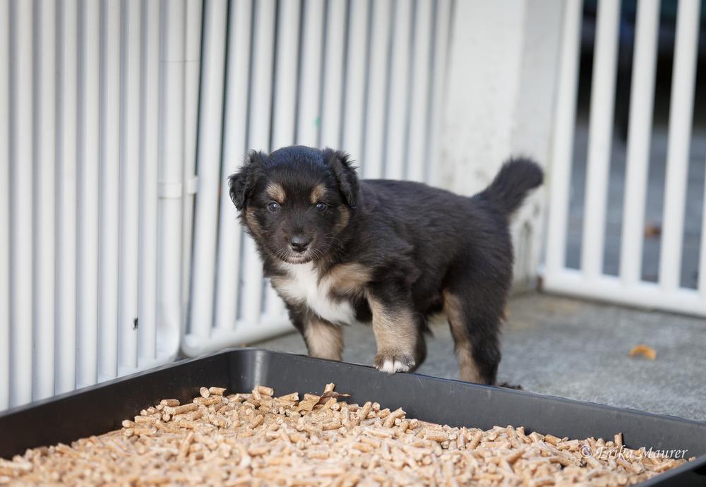Pups10-26-5.jpg