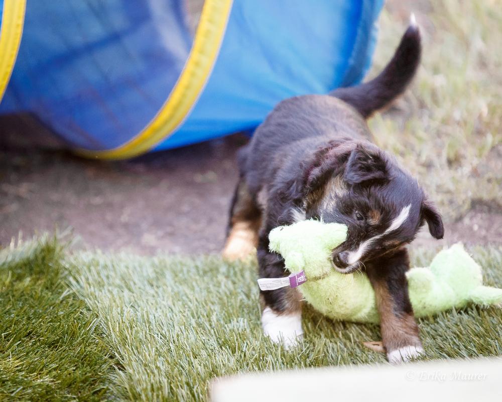 Pups10-26-3.jpg