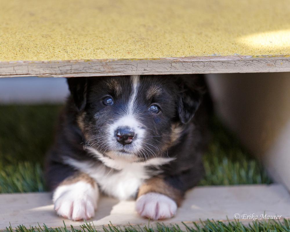 Pups10-26-4.jpg