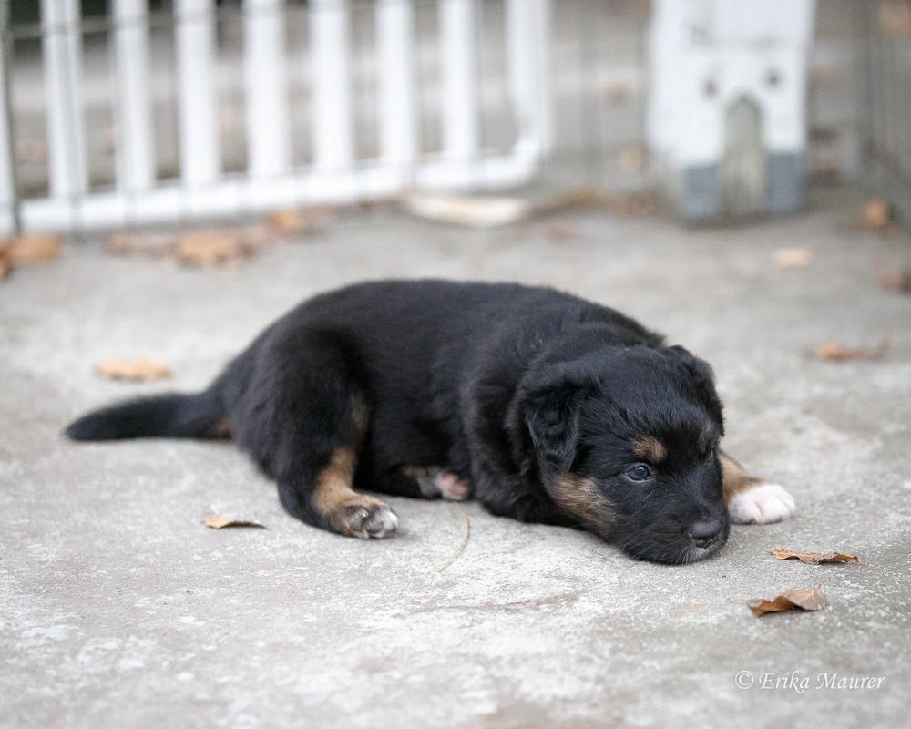Pups10-27-8.jpg