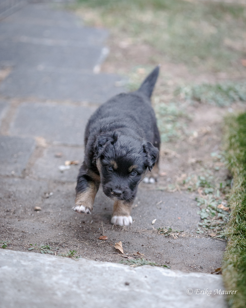 Pups10-27-6.jpg