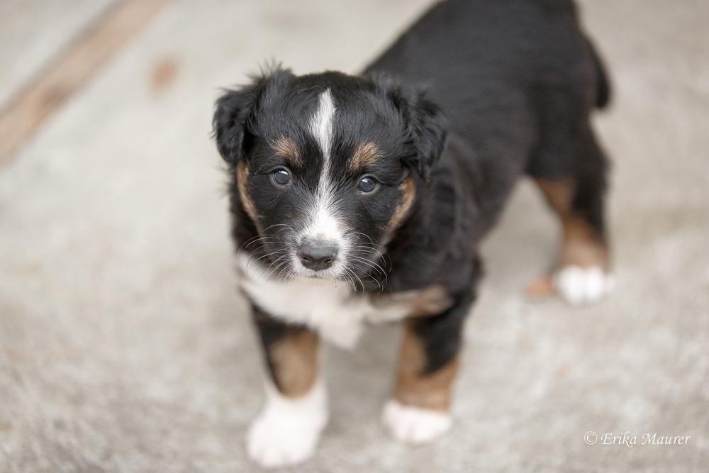 Pups10-27-2.jpg