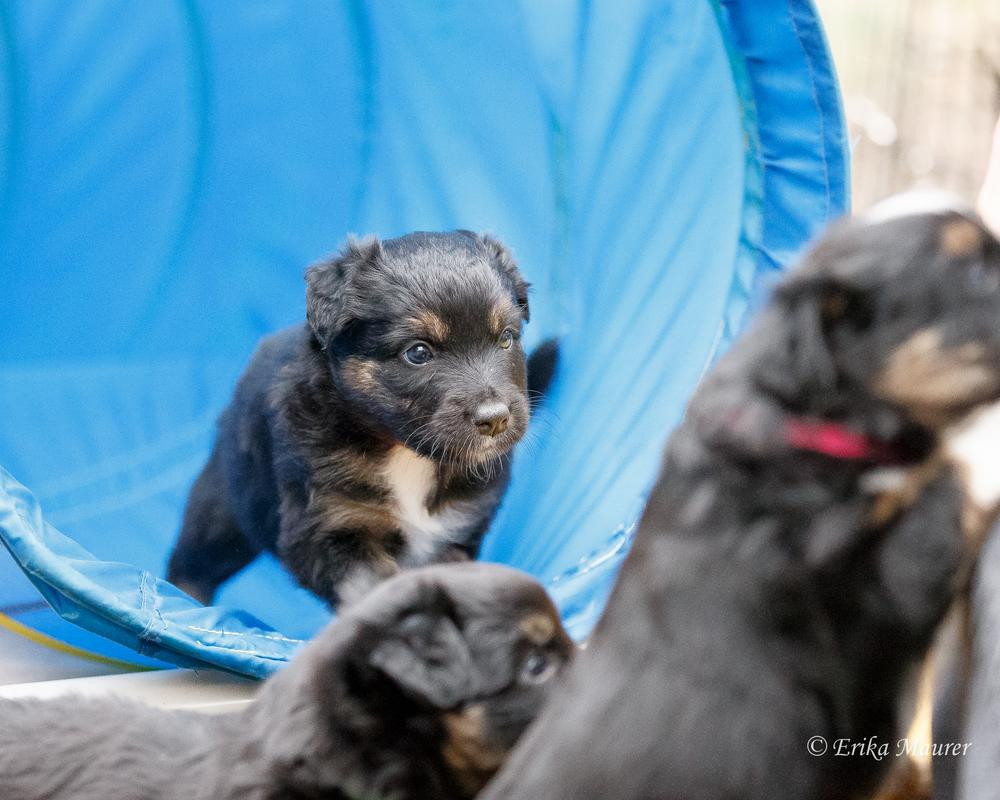 Pups10-27-5.jpg