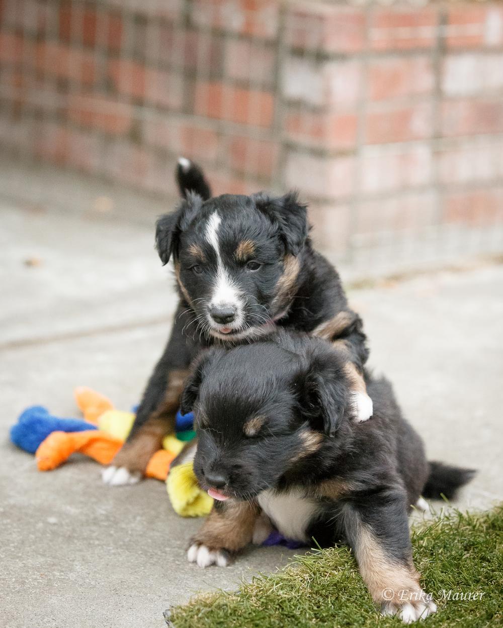 Pups10-27-4.jpg