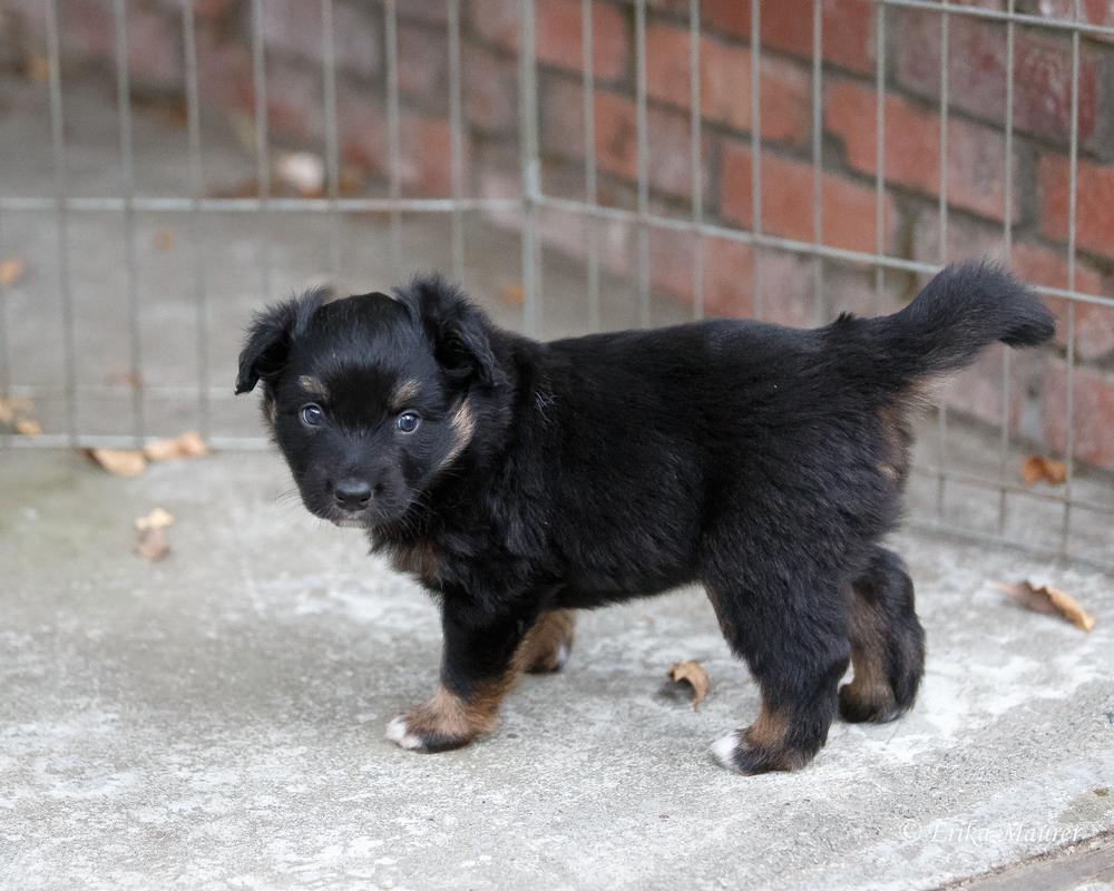 Pups10-27-3.jpg