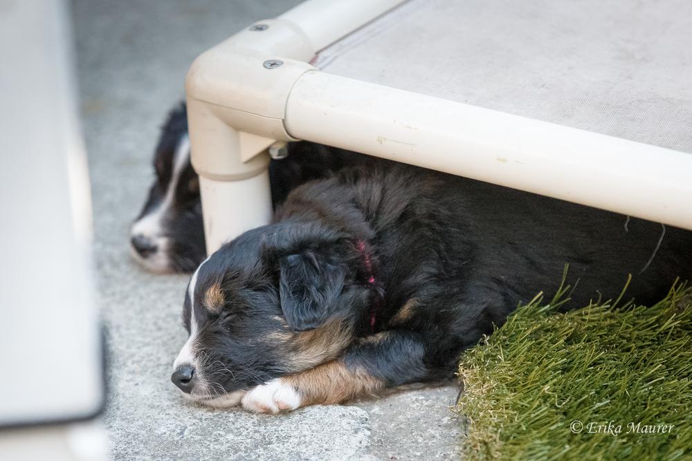 Pups10-29-12.jpg