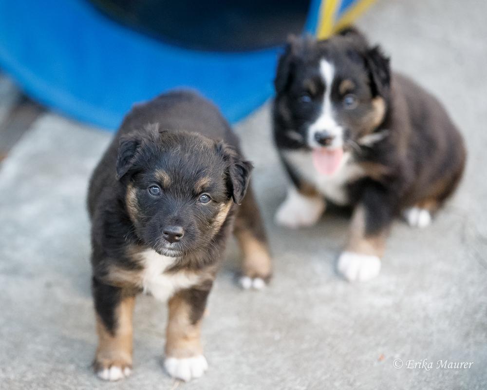 Pups10-29-6.jpg
