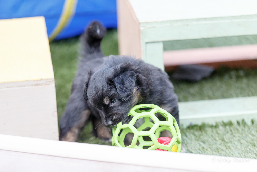 Pups10-28-14.jpg