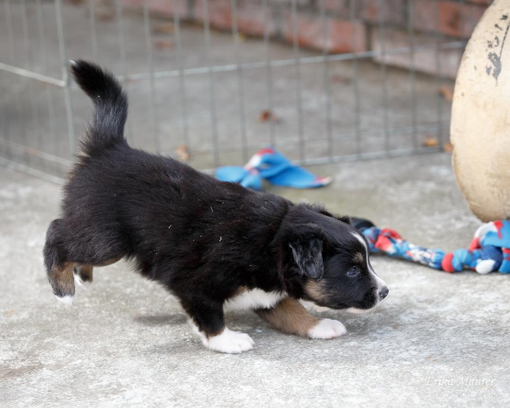 Pups10-28-13.jpg