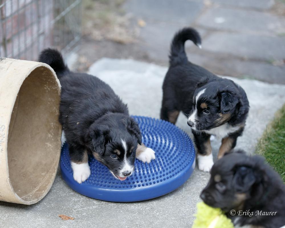 Pups10-28-12.jpg