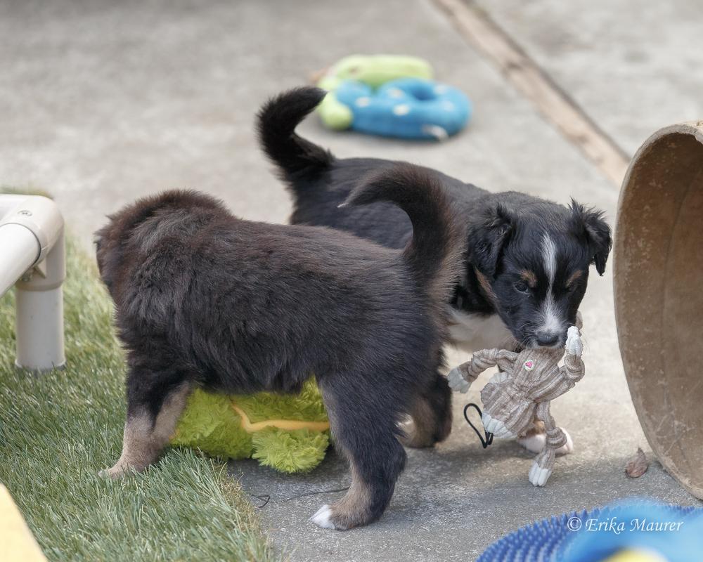 Pups10-28-9.jpg