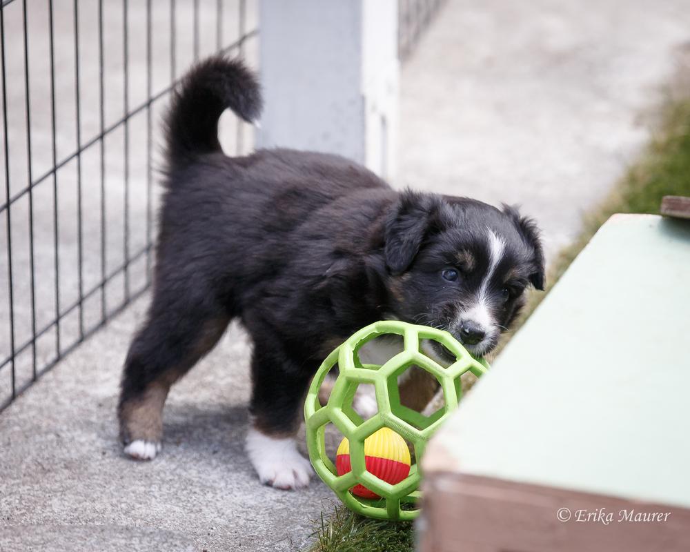 Pups10-28-8.jpg