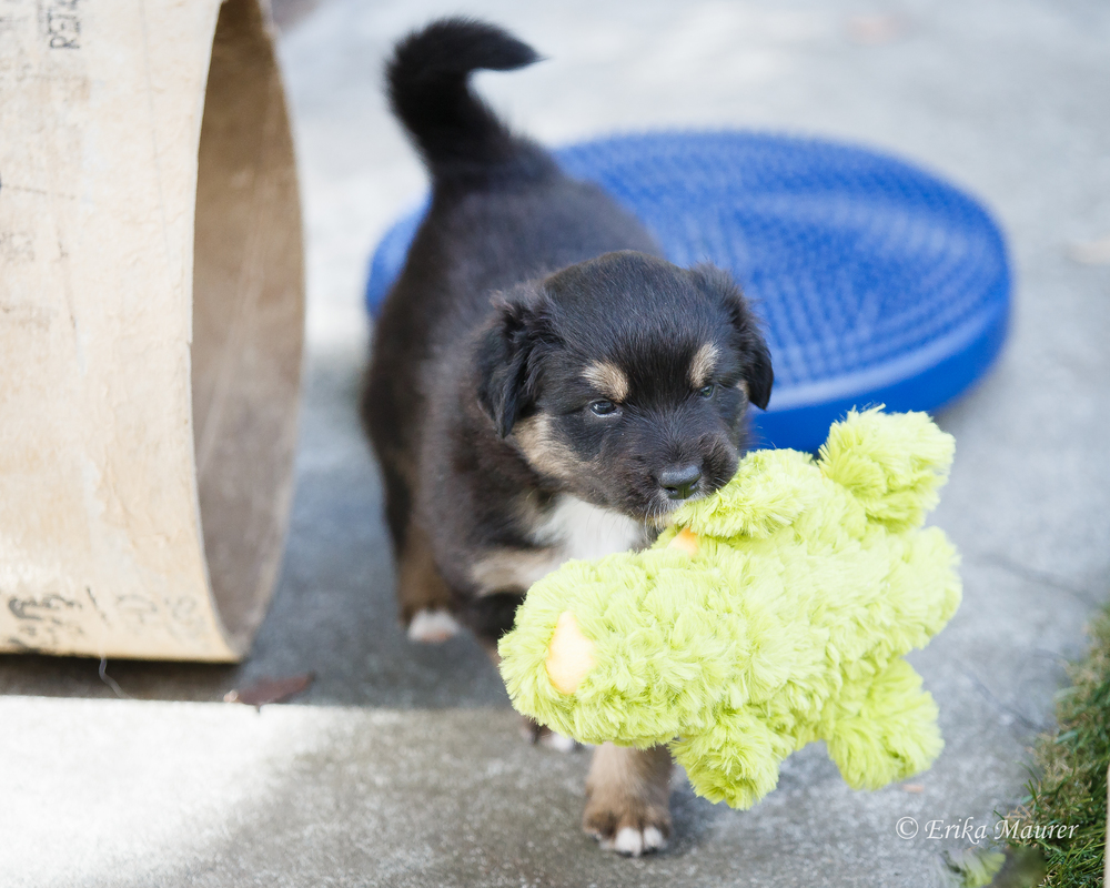 Pups10-28-2.jpg