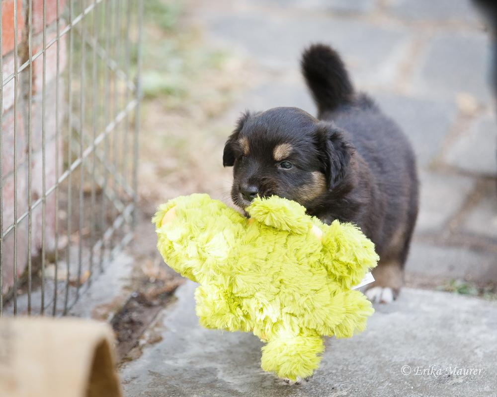 Pups10-28.jpg
