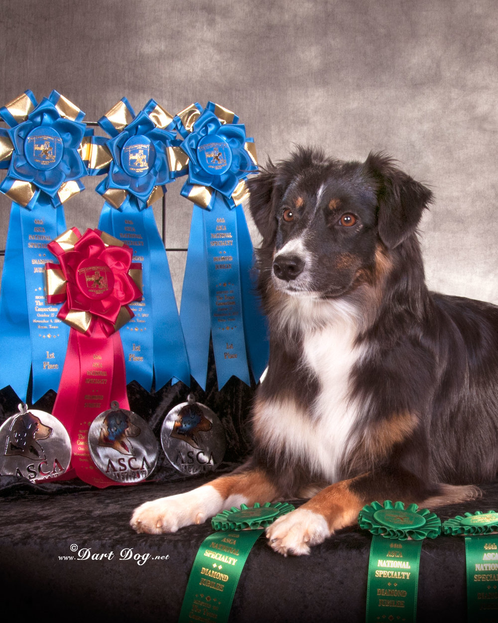2017 ASCA Nationals, Bryan TX - Open Agility ribbons Photo by Dart Dog