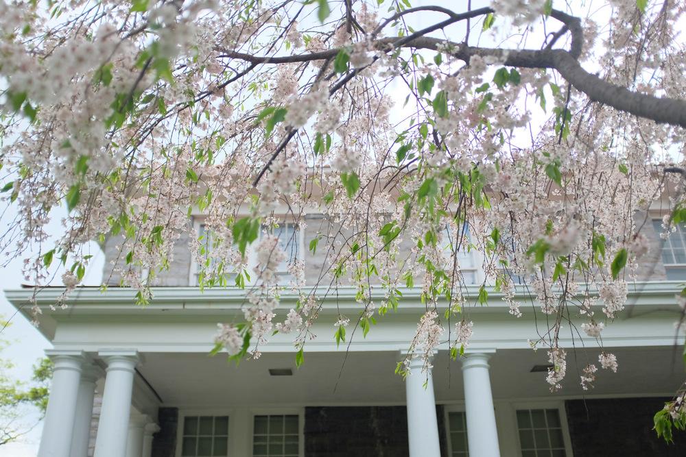 Springtime at James Madison University