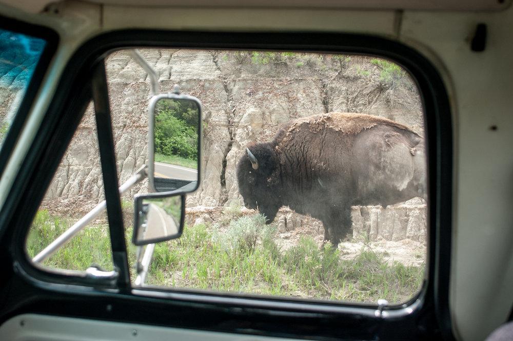 Ginew Little Muddy Buffalo Truck