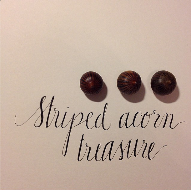acorn_stripedacorntreasure