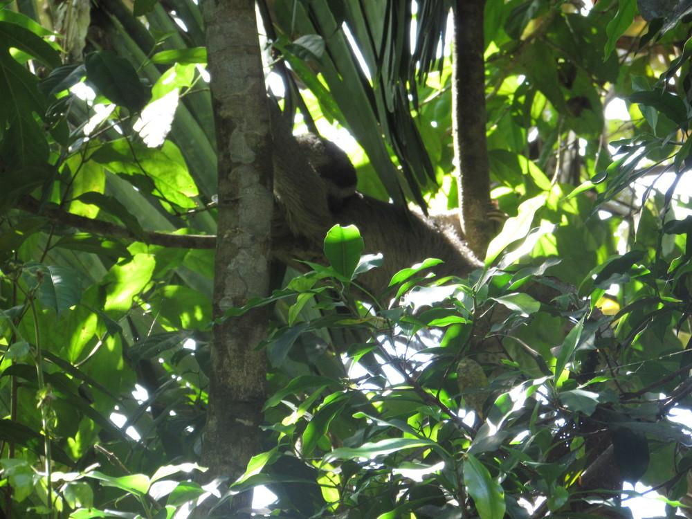 I spot a sloth!!